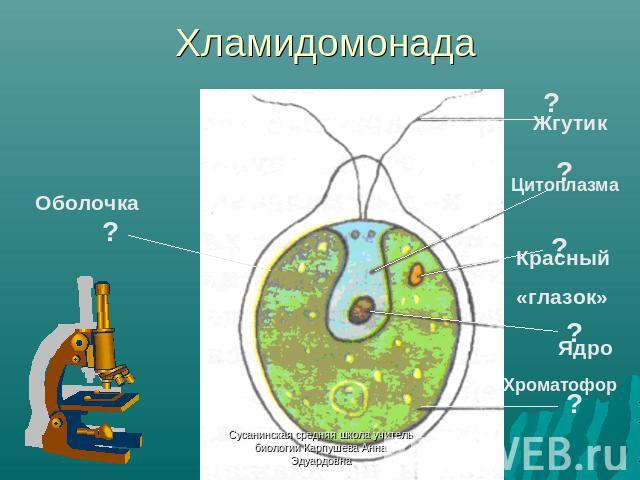 Хроматофор фото