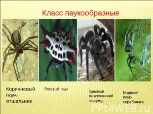 Скачать презентации на тему пауки