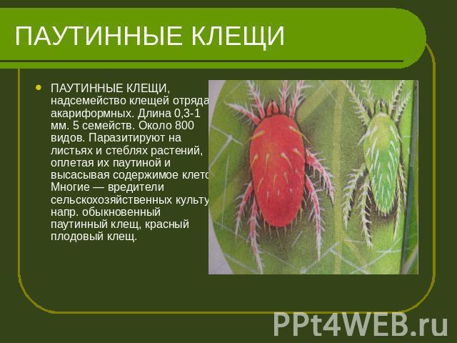 Презентация по биологии Класс Паукообразные 7 класс