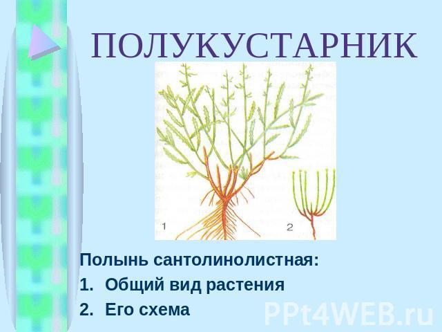 вид растения Его схема