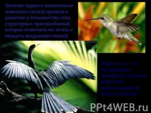 Наличие перьев и значительное изменение скелета привели к развитию у большинства птиц структурных приспособлений...