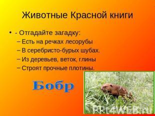 Животные Красной книги - Отгадайте загадку: Есть бери речках лесорубы В серебристо