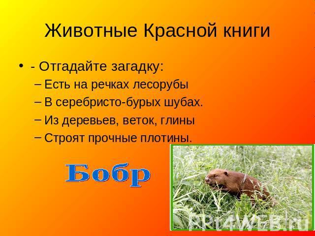 Животные Красной книги - Отгадайте загадку: Есть нате речках лесорубы В серебристо-бурых шубах. Из деревьев, веток, глины Строят прочные плотины. Бобр