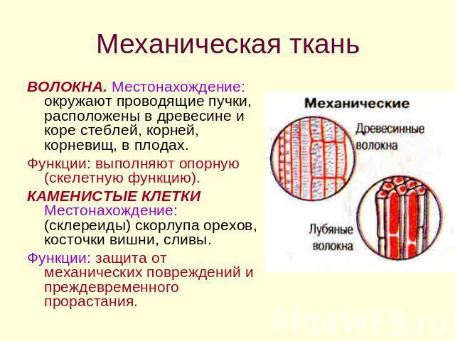 Биология 10 Класс Строение Клетки Презентация