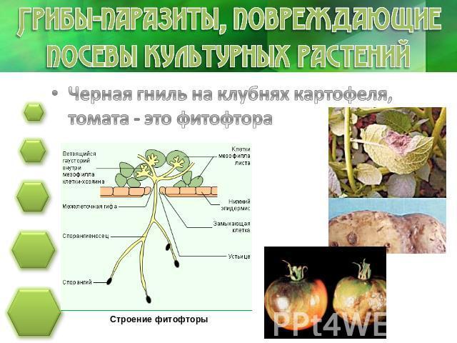 паразиты веках человека