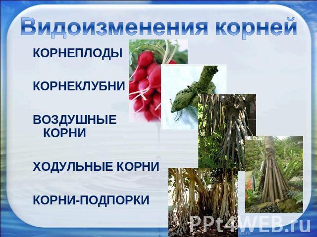 Скачать презентация на тему органы растений
