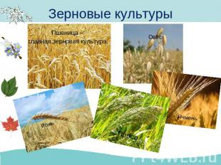 Презентация на тему поле и его