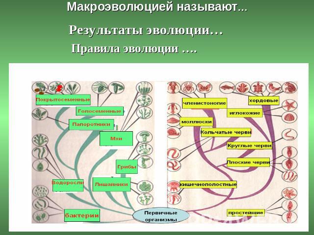 развитие жизни на земле по предмету биология: