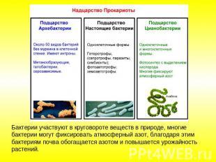 презентация оплодотворение в органическом мире