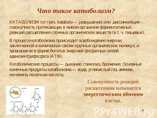 Реферат на тему метаболизм основа существования живых организмов  реферат на тему метаболизм основа существования живых организмов