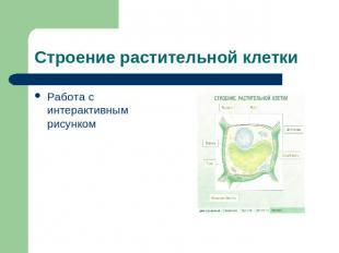 """Слайд 4 из презентации  """"Строение растительной клетки """" к урокам биологии на тему..."""