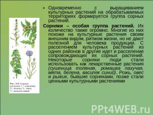 Объясните почему культурные растения не могут конкурировать с сорняками