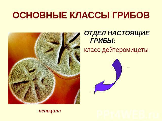 Histochemie: Einführung in Grundlagen und Prinzipien der Methoden
