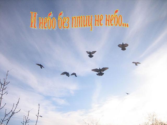 Птицы 4 класс