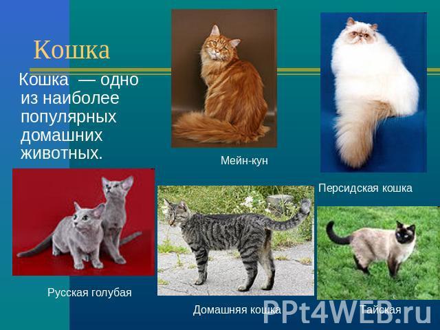 Как сделать проект про кошек 3 класс - ВМС Строй