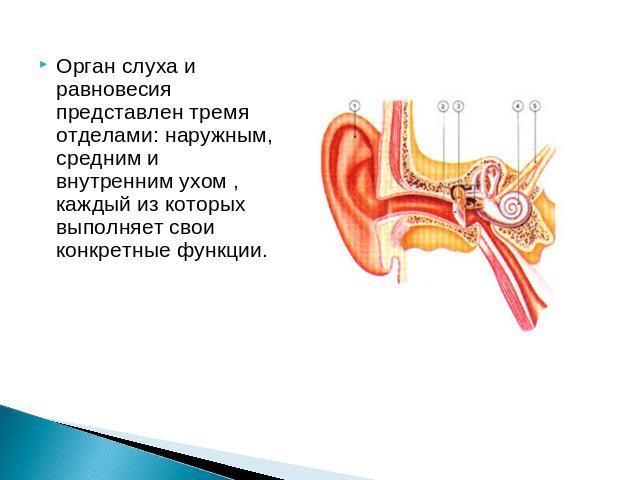 фильм по биологии в 8 классе орган слуха