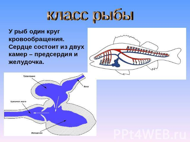 паразиты живущие мозге человека