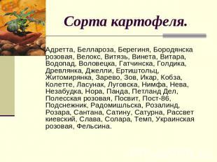 Сорта картофеля. Адретта, Беллароза, Берегиня, Бородянска розовая, Велокс, Витяз