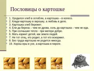 Пословицы о картошке 1. Уродился хлеб в оглоблю, а картошка – в колесо.2. Клади