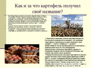 Как и за что картофель получил своё название? Еще Педру Чиеза де Леоне в свое кн