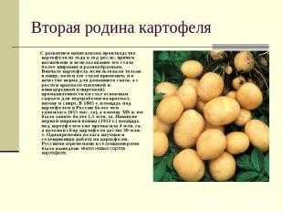 Вторая родина картофеля С развитием капитализма производство картофеля из года в