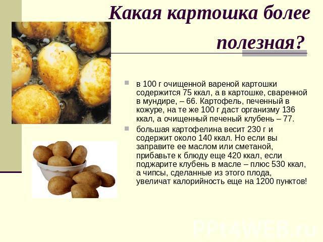 Какая картошка более полезная? в 100 г очищенной вареной картошки содержится 75 ккал, а в картошке, сваренной в мундире, – 66. Картофель, печенный в кожуре, на те же 100 г даст организму 136 ккал, а очищенный печеный клубень – 77. большая картофелин…
