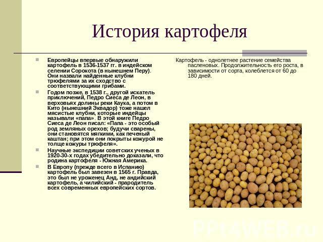 История картофеля Европейцы впервые обнаружили картофель в 1536-1537 гг. в индейском селении Сорокота (в нынешнем Перу). Они назвали найденные клубни трюфелями за их сходство с соответствующими грибами. Годом позже, в 1538 г., другой искатель приклю…