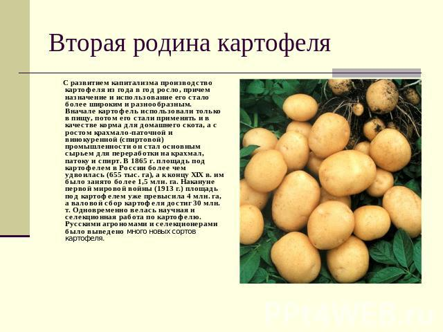 Вторая родина картофеля С развитием капитализма производство картофеля из года в год росло, причем назначение и использование его стало более широким и разнообразным. Вначале картофель использовали только в пищу, потом его стали применять и в качест…