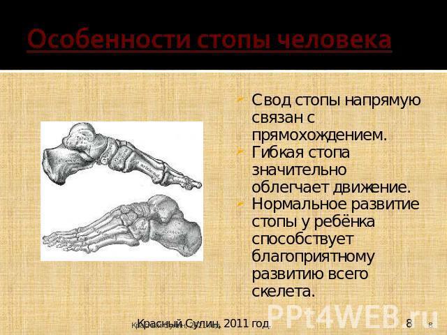 Особенности грудной клетки человека связанные с прямохождением