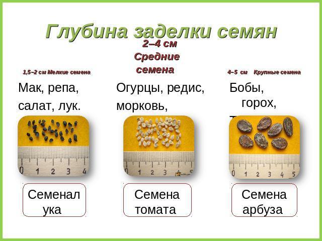 арбуз при правильном питании
