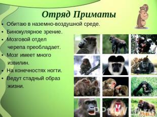 Отряд Приматы Обитаю во наземно-воздушной среде. Бинокулярное зрение. Мозговой от