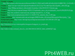 Утконос равно ехидна http://files.school-collection.edu.ru/dlrstore/b5fba512-f820-4e