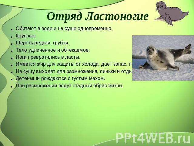 Отряд Ластоногие Обитают во воде равным образом в суше одновременно. Крупные. Шерсть редкая, грубая. Тело удлиненное да обтекаемое. Ноги превратились на ласты. Имеется тук чтобы защиты ото холода, дает запас, повышает густота тела. На сушу выходят к размножения, …