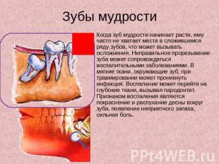 Строение Зубов Презентация