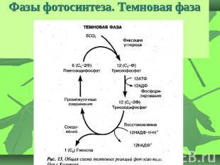 Схема световая фаза фотосинтеза: http://schmhlpr.appspot.com/shema-svetovaya-faza-fotosinteza.html