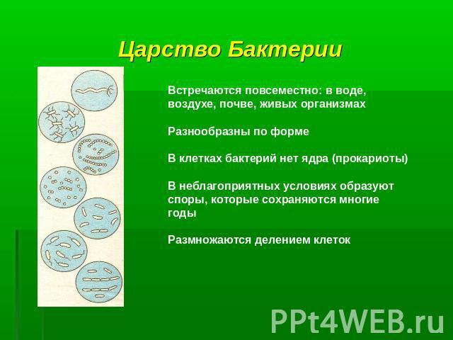бактерии паразиты человека