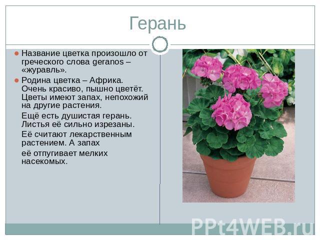 Домашние цветы на и их описание