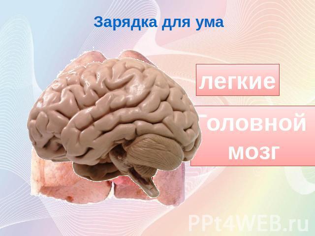 Зарядка для умалегкиеголовной мозг