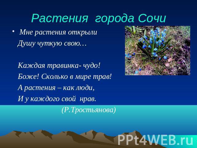 Растения города презентация
