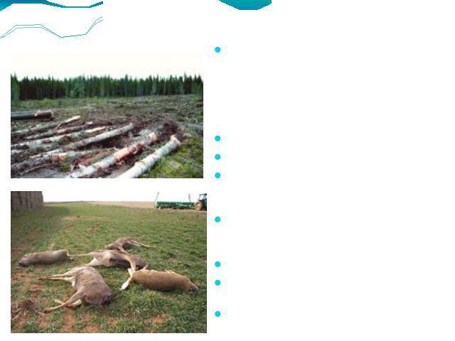 Основными, связанными вместе с деятельностью человека факторами, которые способны подвергнуть будущий угрозе, опасности тож исчезновению, являются:  Уничтожение alias повреждение мест обитания Промысловая добрая воля Контролирование вредителей да хищников с целью защиты до…