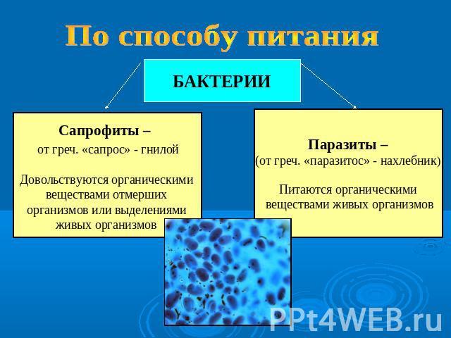 полынь очищение организма от паразитов