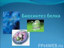 Биосинтез Белка В Клетке Кратко
