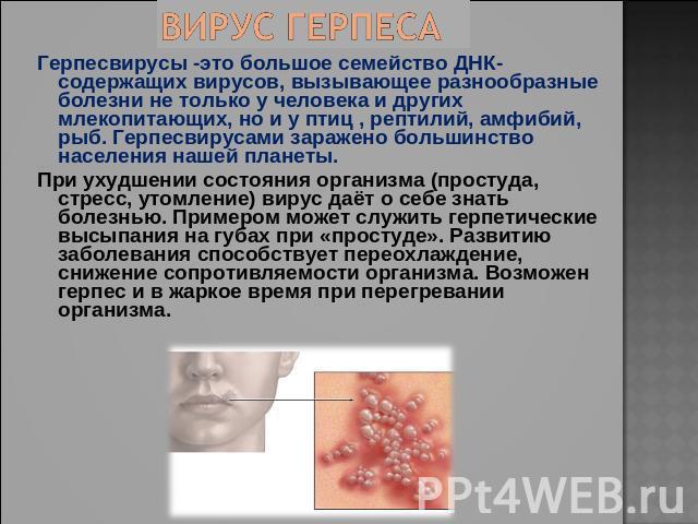 """Презентация на тему """"Виды вирусных заболеваний человека, животных и растений"""" - скачать бесплатно презентации по Биологии"""