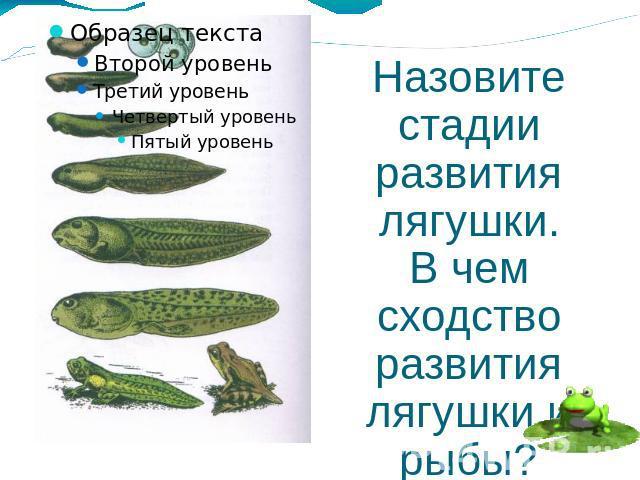 стадии развития лягушки.