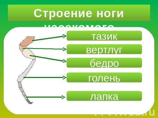 Презентация на тему класс насекомые