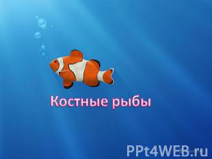 Презентация По Биологии На Тему Рыбы