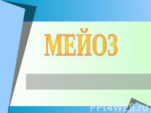 Презентация Митоз И Мейоз 10 Класс