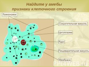 Характеристика среды обитания, внешнего вида, особенностей строения и жизнедеятельности...