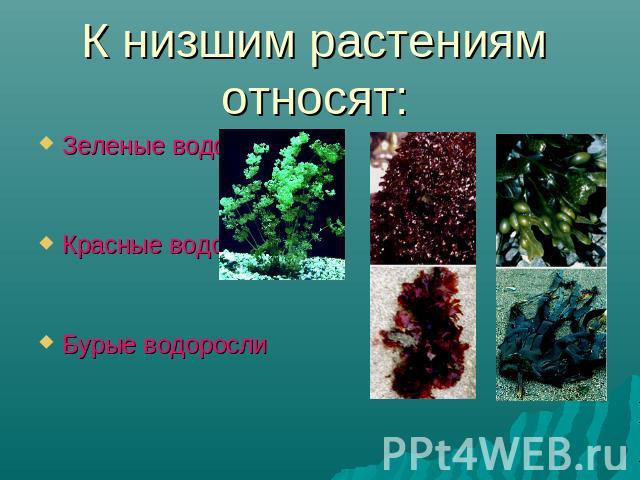 Вывод: в чем сходство и различие представителей отдела зеленые водоросли?