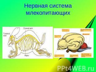 Нервная система млекопитающих.
